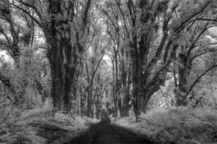 Jungle Road in IR