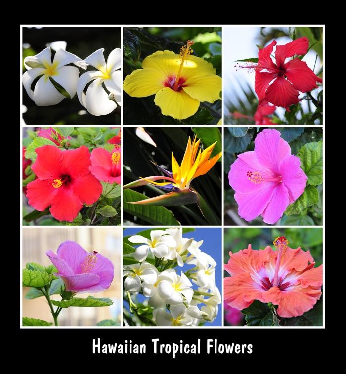 Maui Hawaii 2012