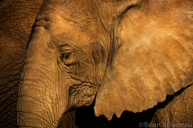 Elephant Repose