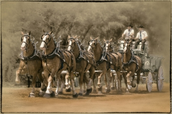 Draft Horses 2-John A Olson-PFA