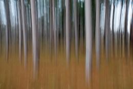 untitled1-Mark Karney-PFA