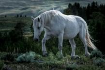 Equine Solitude