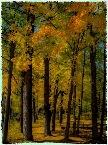 Blended Grove