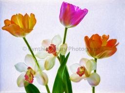 CF Flowers 2