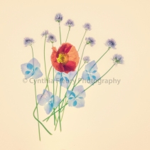 CF Flowers 5