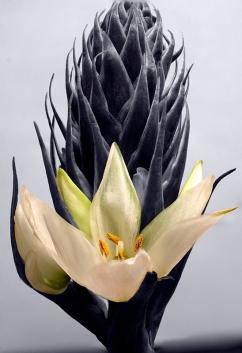 2. flower
