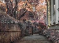 path to tree in garden charleston